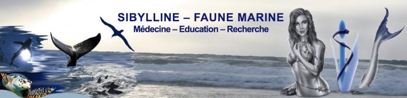 Association Sybilline Oceans Faune Marine