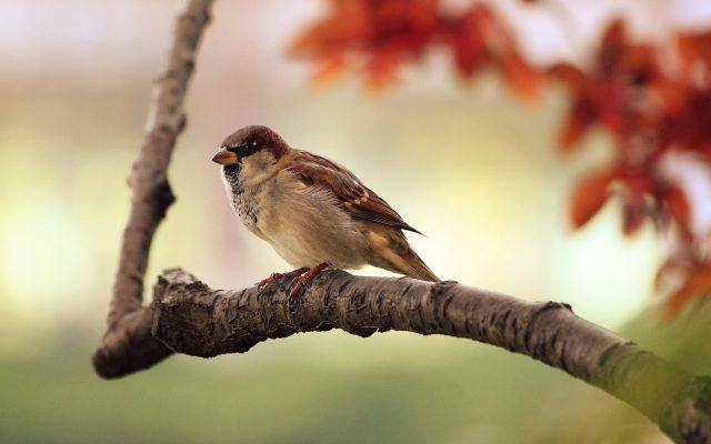 Compter Les Oiseaux Du Jardin Protection Animale