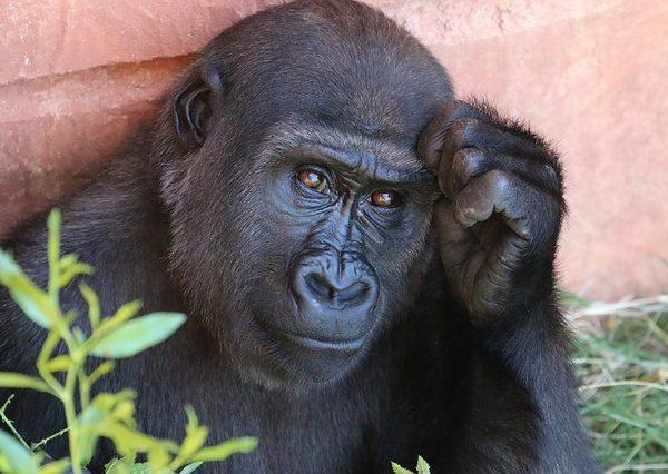Journee Mondiale De Lintelligence Animale Soigner Son Animal