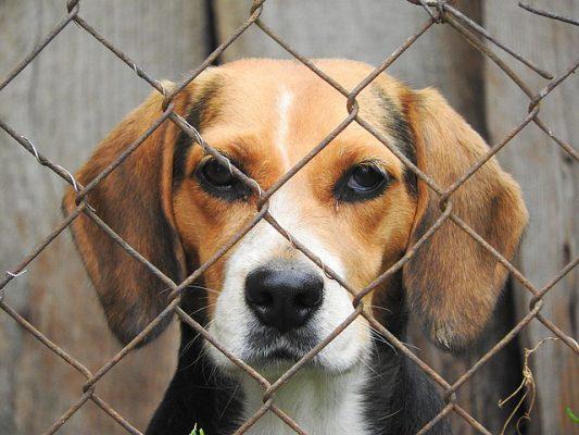 Maltraitance Animale La Justice Donne Raison Aux Bourreaux
