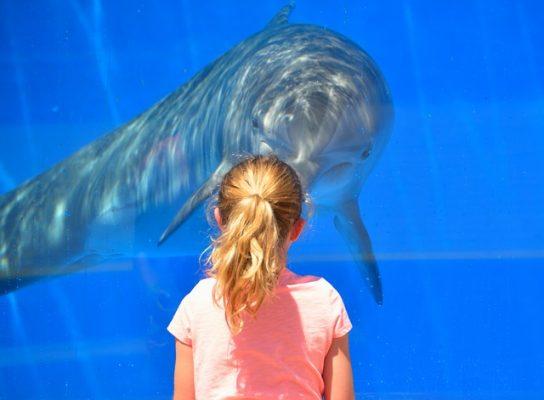 Un Nouvel Arrete Sur La Captivite Des Cetaces