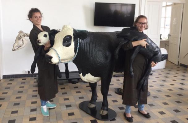 Vache Mannequin Ecole Veterinaire